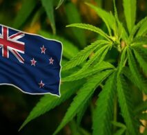 Buying Weed in New Zealand
